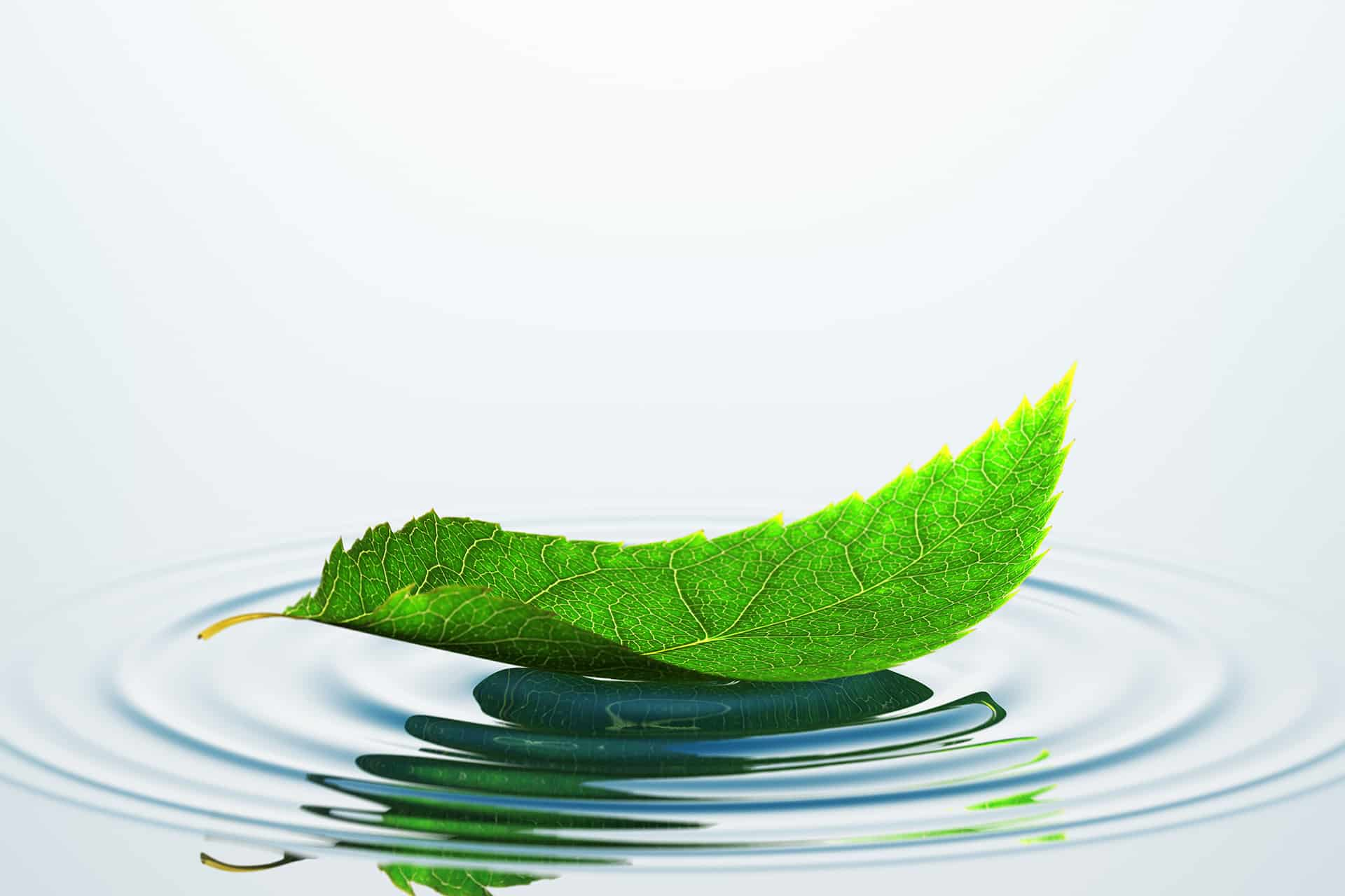Grønt blad som flyter i vannet